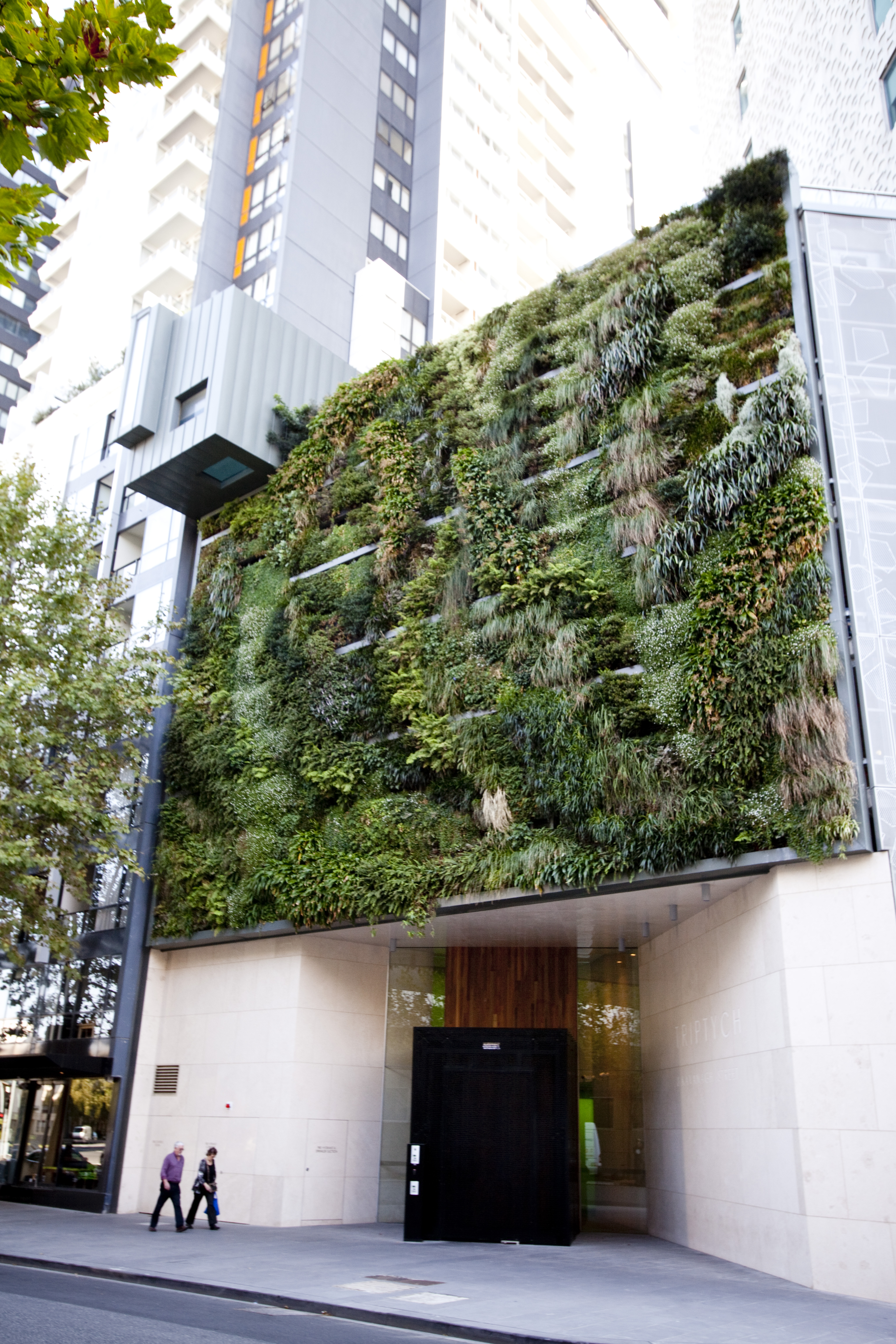 Green wall installed at the front of a a multi-story apartment building in Southbank. Green infrastructure, such as green walls, provides an example of how we can connect habitats through vegetation corridors in the more dense urban areas of the municipality (Photo Credit: City of Melbourne).